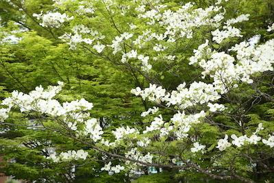 180417shinryoku.JPG