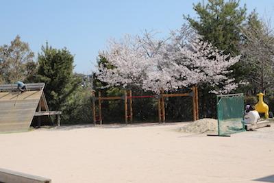 200406sakura.JPG