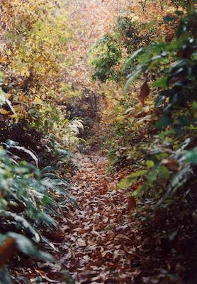 森の道8.jpg
