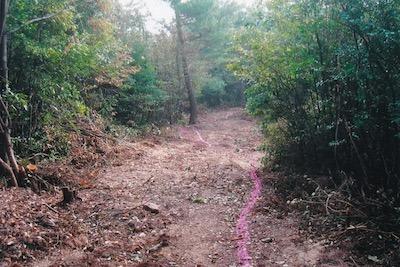 森伐採2004.jpeg
